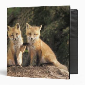 Red Fox pup in front of den Vulpes vulpes) 3 Ring Binder