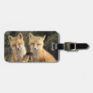 Red Fox pup in front of den Vulpes vulpes) Bag Tag