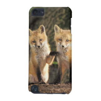 Red Fox pup in front of den Vulpes vulpes) iPod Touch (5th Generation) Covers