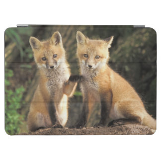 Red Fox pup in front of den Vulpes vulpes) iPad Air Cover