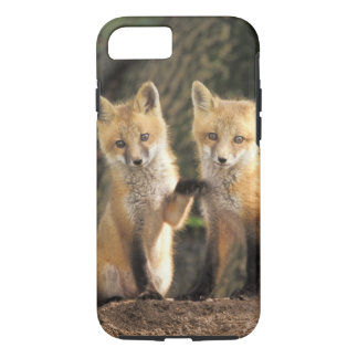 Red Fox pup in front of den Vulpes vulpes) iPhone 7 Case