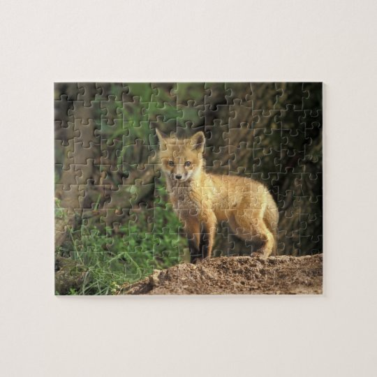 Red Fox pup in front of den (Vulpes vulpes) Jigsaw Puzzle
