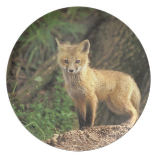 Red Fox pup in front of den (Vulpes vulpes) Melamine Plate
