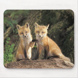 Red Fox pup in front of den Vulpes vulpes) Mouse Pad