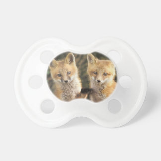 Red Fox pup in front of den Vulpes vulpes Pacifier