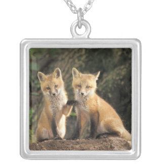 Red Fox pup in front of den Vulpes vulpes) Silver Plated Necklace