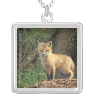 Red Fox pup in front of den (Vulpes vulpes) Silver Plated Necklace