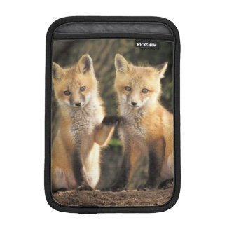 Red Fox pup in front of den Vulpes vulpes) Sleeve For iPad Mini