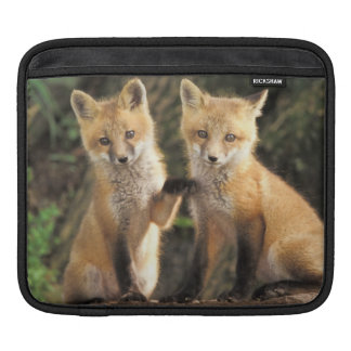 Red Fox pup in front of den Vulpes vulpes) Sleeve For iPads