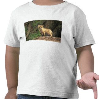 Red Fox pup in front of den Vulpes vulpes T Shirts