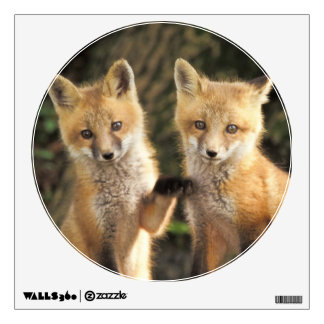 Red Fox pup in front of den Vulpes vulpes) Wall Decal