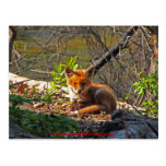 Red Fox Pup Post Card