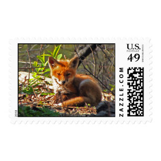 Red Fox Pup Postage Stamp