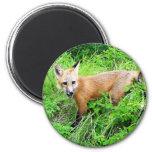 Red Fox Pup Refrigerator Magnet