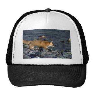Red Fox running beside river Trucker Hat