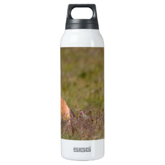 Red Fox SIGG Thermo 0.5L Insulated Bottle
