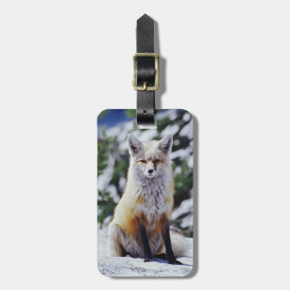 Red Fox sitting on snow bank, Vulpes, Mt. Bag Tag