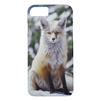 Red Fox sitting on snow bank, Vulpes, Mt. iPhone 7 Case