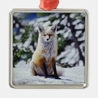 Red Fox sitting on snow bank, Vulpes, Mt. Metal Ornament