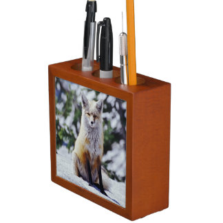 Red Fox sitting on snow bank, Vulpes, Mt. Pencil/Pen Holder