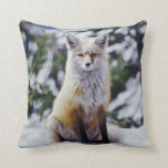Red Fox sitting on snow bank, Vulpes, Mt. Pillow