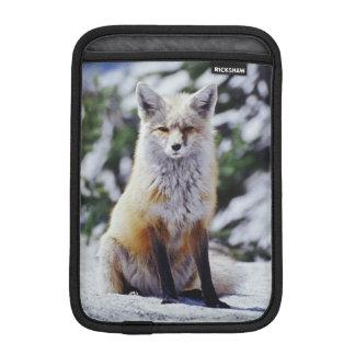 Red Fox sitting on snow bank, Vulpes, Mt. Sleeve For iPad Mini