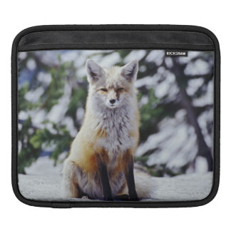 Red Fox sitting on snow bank, Vulpes, Mt. Sleeve For iPads