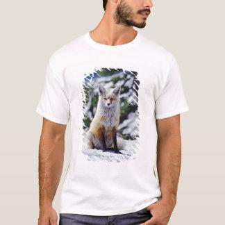 Red Fox sitting on snow bank, Vulpes, Mt. T-Shirt