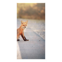 Red Fox Sitting on the side of the road Card