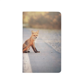 Red Fox Sitting on the side of the road Journal