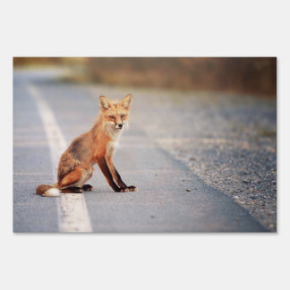 Red Fox Sitting on the side of the road Lawn Sign