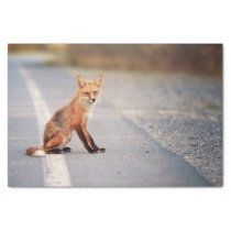 Red Fox Sitting on the side of the road Tissue Paper