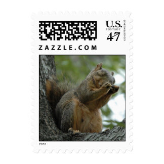Red Fox Squirrel Postage