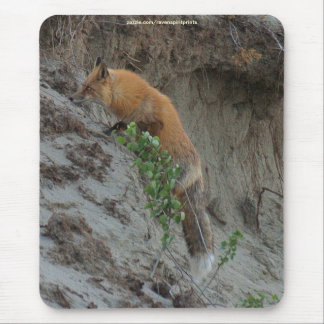 Red Fox Stealing Eggs Wildlife Mousepad
