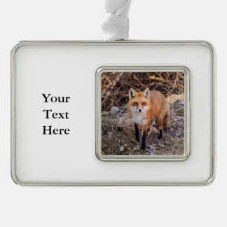 Red Fox up close and personal Ornament