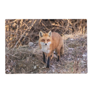 Red Fox up close and personal Placemat