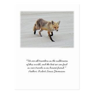 Red Fox Vixen - Island Beach State Park - NJ Postcard
