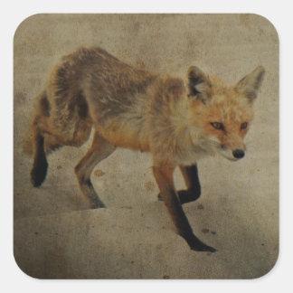 Red Fox Vixen - Island Beach State Park - NJ Square Sticker