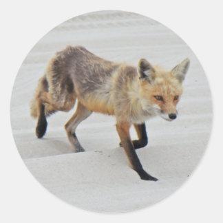 Red Fox Vixen - Island Beach State Park - NJ Classic Round Sticker