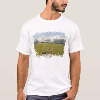 Red Fox, Vulpes fulva, on log, , Hallo Glacier T-Shirt