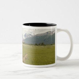 Red Fox, Vulpes fulva, on log, , Hallo Glacier Two-Tone Coffee Mug