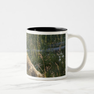Red Fox, Vulpes fulva on log, Wildflowers, 2 Two-Tone Coffee Mug
