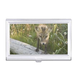 Red Fox, Vulpes fulva on log, Wildflowers, Business Card Case