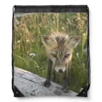 Red Fox, Vulpes fulva on log, Wildflowers, Drawstring Bag