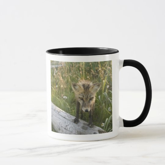 Red Fox, Vulpes fulva on log, Wildflowers, Mug