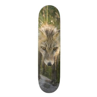 Red Fox, Vulpes fulva on log, Wildflowers, Skate Board Deck