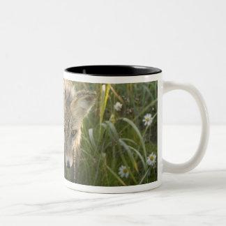 Red Fox, Vulpes fulva on log, Wildflowers, Two-Tone Coffee Mug