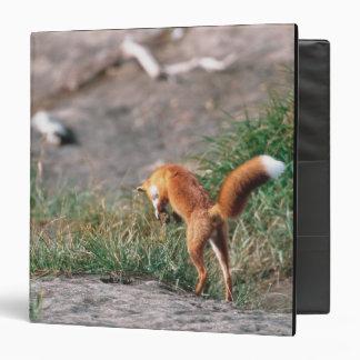 Red Fox, Vulpes vulpes, Alaska Peninsula, 3 3 Ring Binder