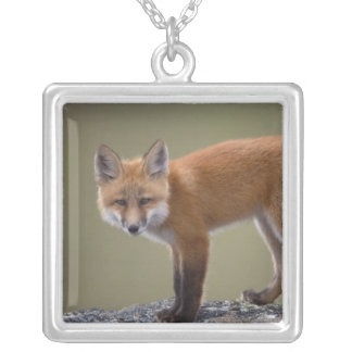 red fox, Vulpes vulpes, along the central North 2 Silver Plated Necklace