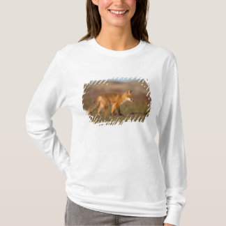 red fox, Vulpes vulpes, along the central T-Shirt